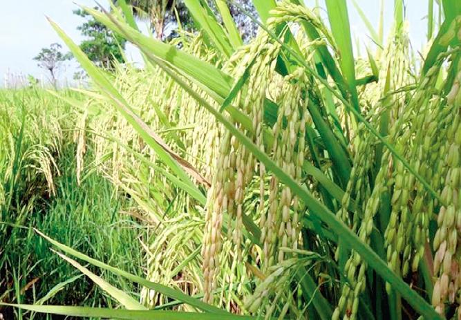Liquid Foliar Fertilizer Increases Crop Yield – Agriculture