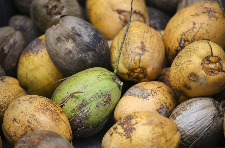Hybrid Coconut: Its Potential to Help Overcome Poverty
