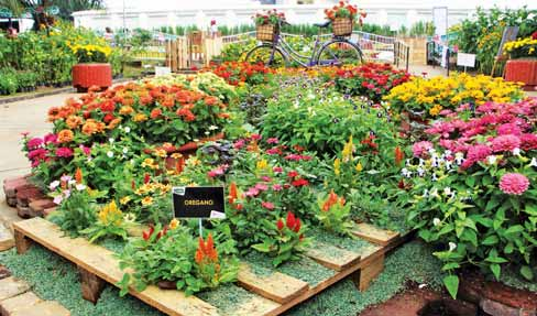 Adaptability Of Annuals To The Philippine Climate Agriculture Monthly