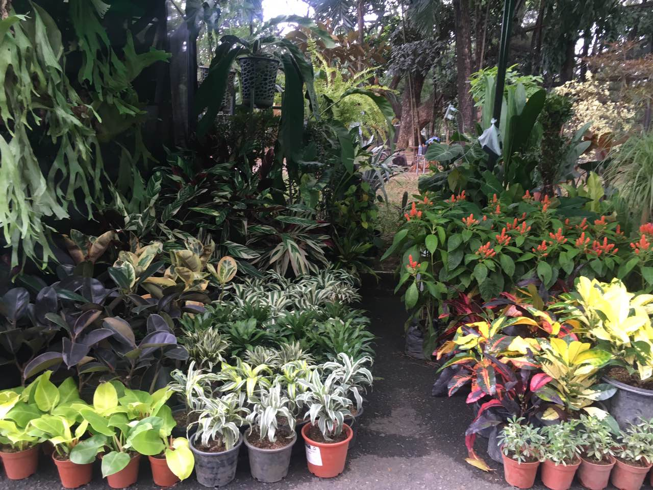 Philippine Plant Festival 2019 Has Everything For The Horticulture Enthusiast Agriculture Monthly