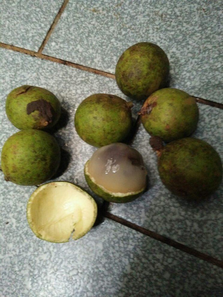 Chayi fruits