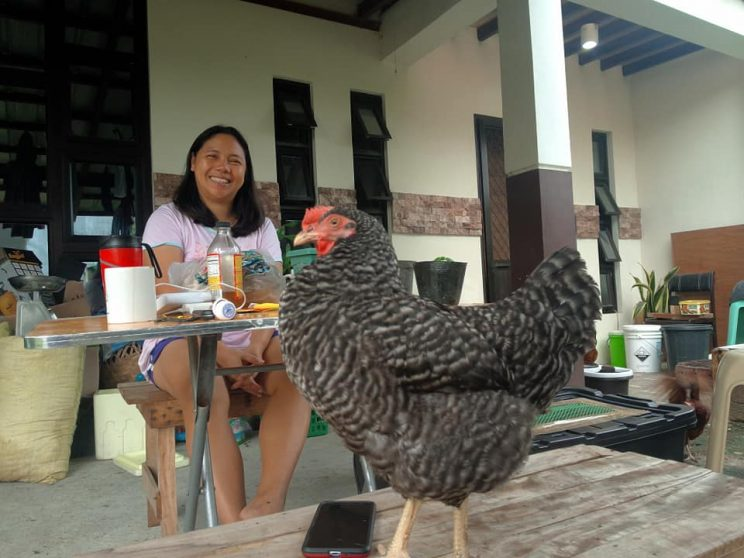 8 Hapi Domingo posing with a chicken. They keep a separate flock for their personal meat consumption. 744x558 - A couple invested in an urban chicken farm to foster food security and sustainability, part 1