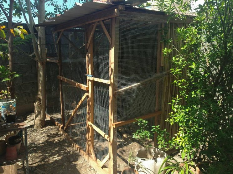8 Starting an urban chicken farm is feasible. Provided that theres ample space. 744x558 - A couple invested in an urban chicken farm to foster food security and sustainability, part 2