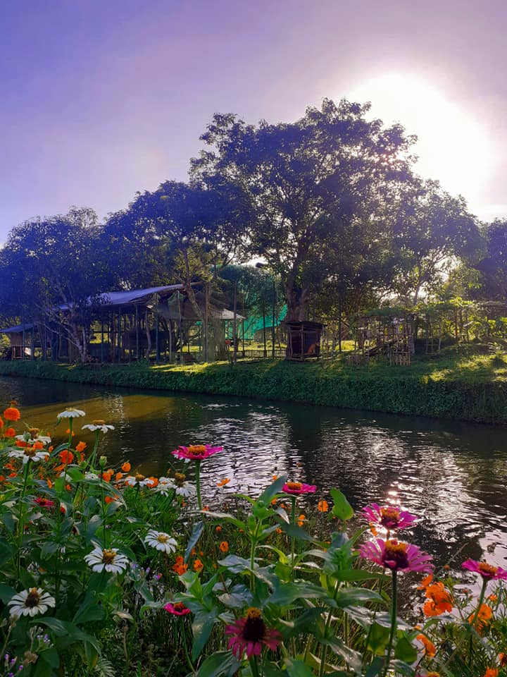 One of the amenities on the farm is a pond where guests can do fishing and buy the fishes for P130 per kilo. There are 6,000 tilapia fingerlings in their second fish pond that is surrounded by zinnias and other flowers. (Photo by Anna Palban)